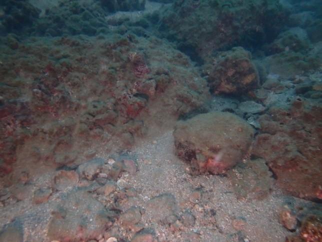 海の底は・・岩 コイズミユウタ